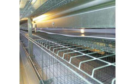 Ceintures de convoyeur de fumier de volaille de pp / PE pour la ferme de poulet